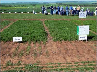 Pristine forage technologies premium pasture and forage legume farming profit systems australia - Profitable crops small plots ...